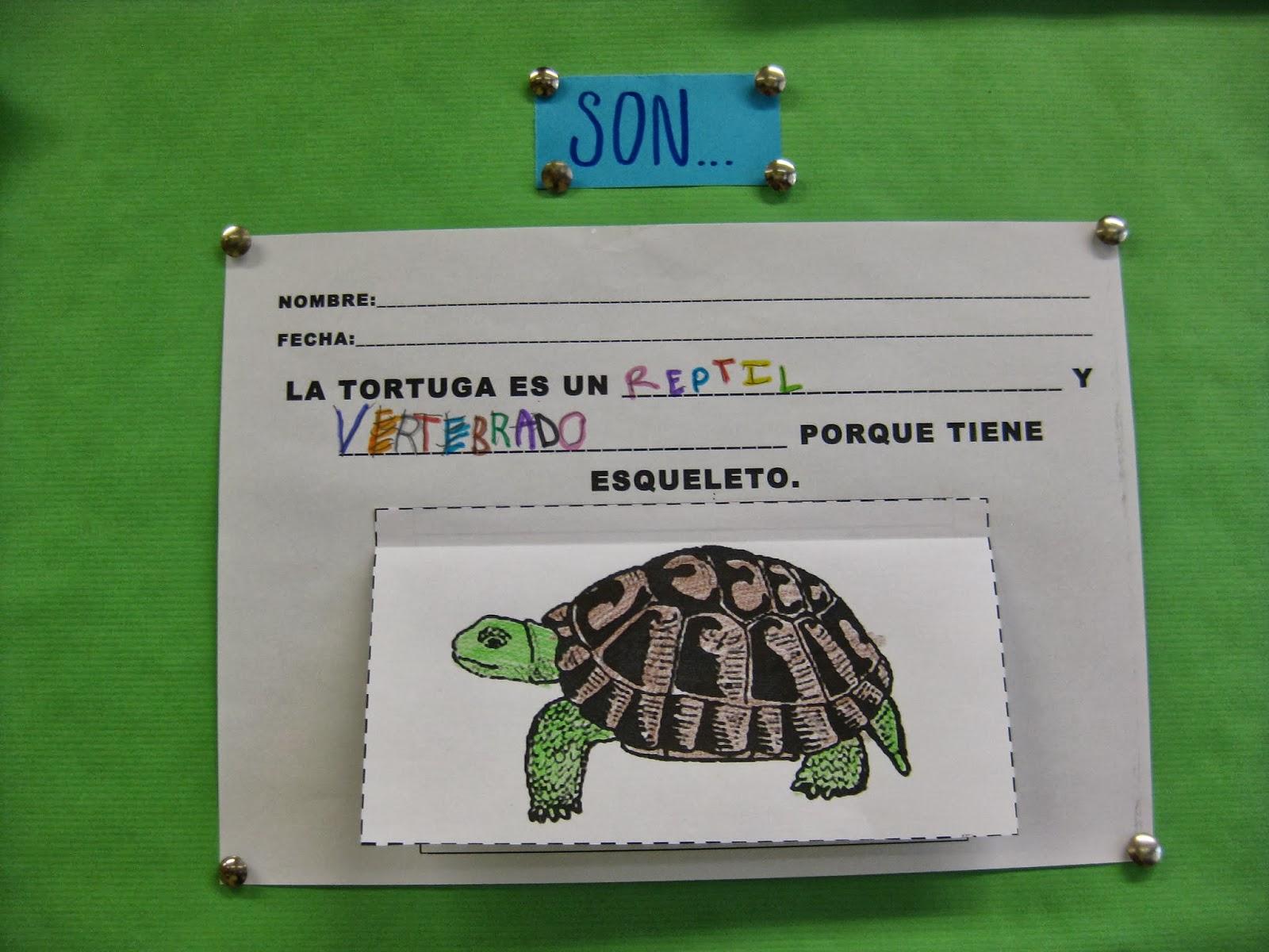 Trabajando con personitas Las Tortugas son reptiles