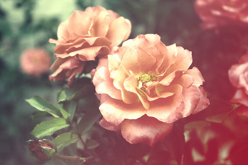 Description Flower Tumblrflower Tumblr Themesflower Quotesflower Cursorflower Emoticonflower Backgroundfloral