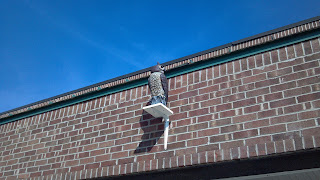 fake owl on top of building to maybe keep birds away