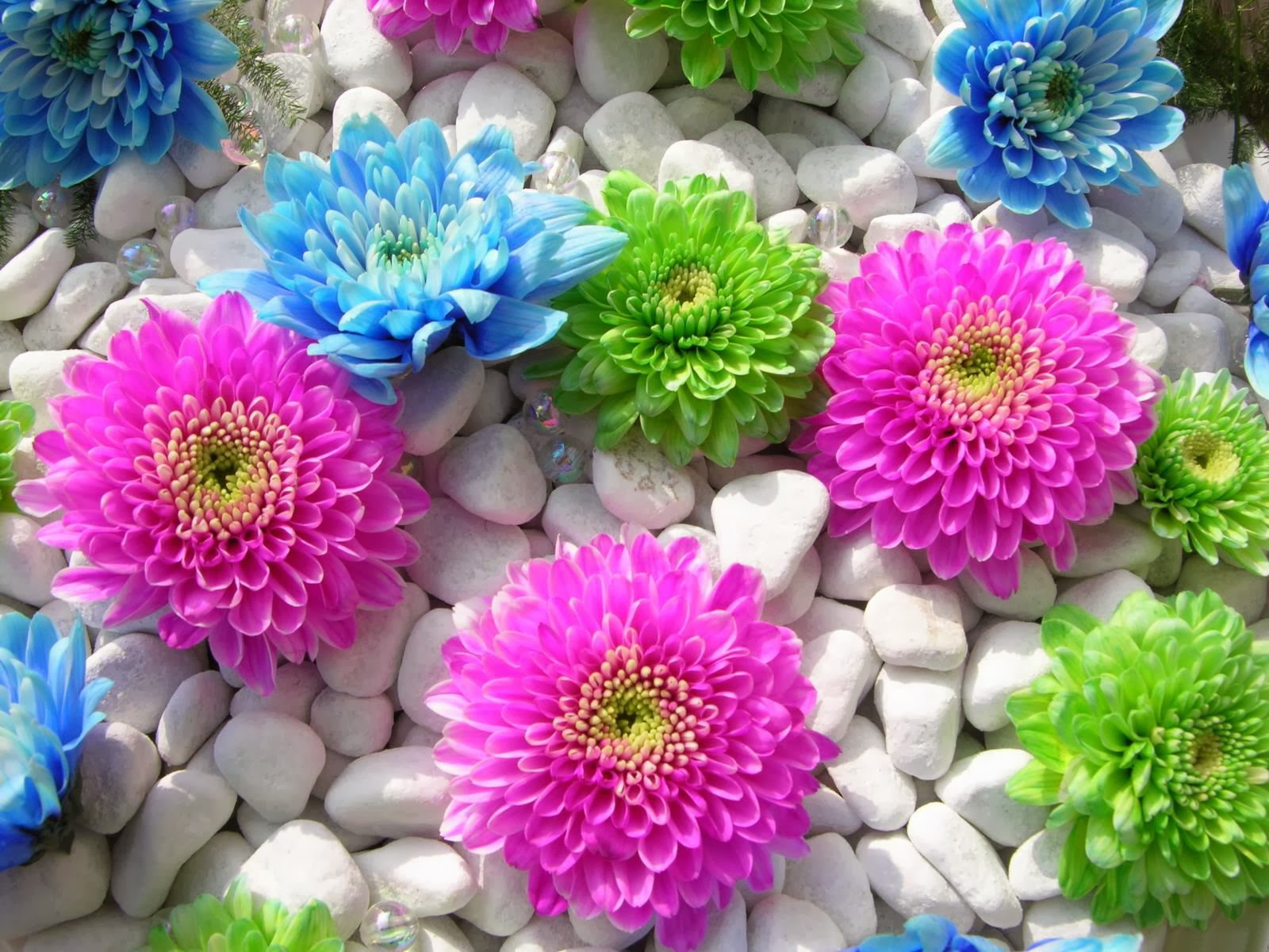 For your desktop beautiful flowers wallpapres Beautiful flowers photos