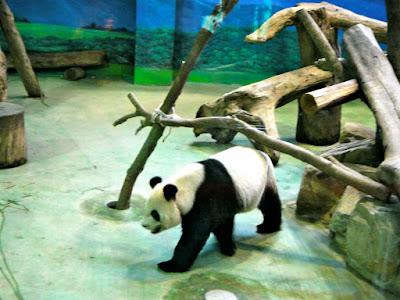 Yuan Yuan Taiwan Panda