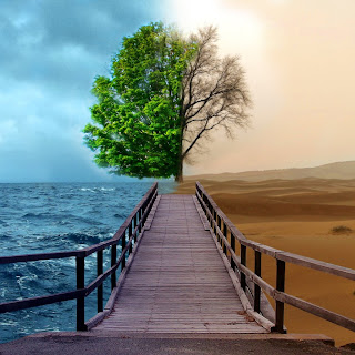 Free Nature Wallpaper - Positive/Negative