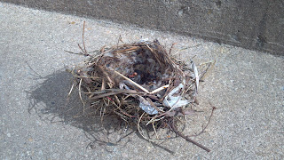 bird nest on the ground