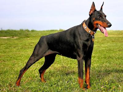 Mutilación canina prohibida Europa