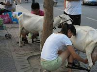Pasangan Suami Istri Ini Jual Susu Kambing langsung di Jalanan