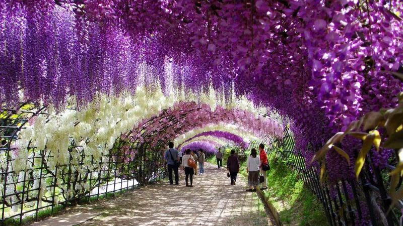 gradina, Fuji, flori, mentalitate, dezvoltare personala, viziune, visuri