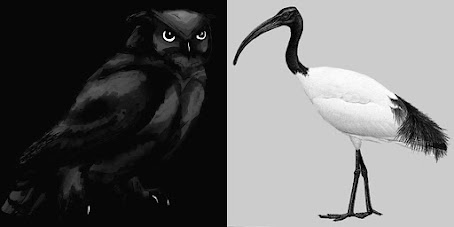 Owl & Ibis - A Confluence of Minds