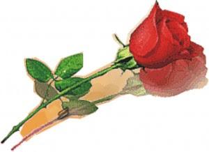 mawar Tanaman Penolak Santet