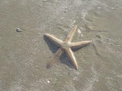 Sekilas Tentang Bintang Laut