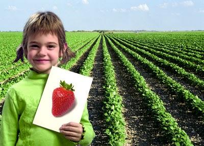 Agricultura organica beneficios de la agricultura organica for Rotacion cultivos agricultura ecologica
