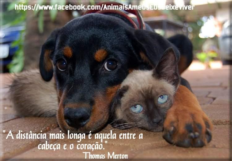 Animais Ame Os E Os Deixe Viver Frases Animais Abril 2013