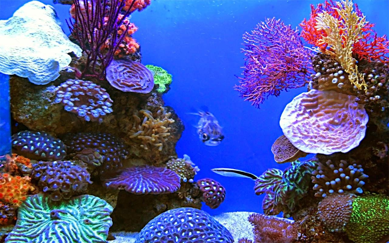 Aquarium fond dcran anim aquarium vivant pour fond d 233 for Fond ecran aquarium