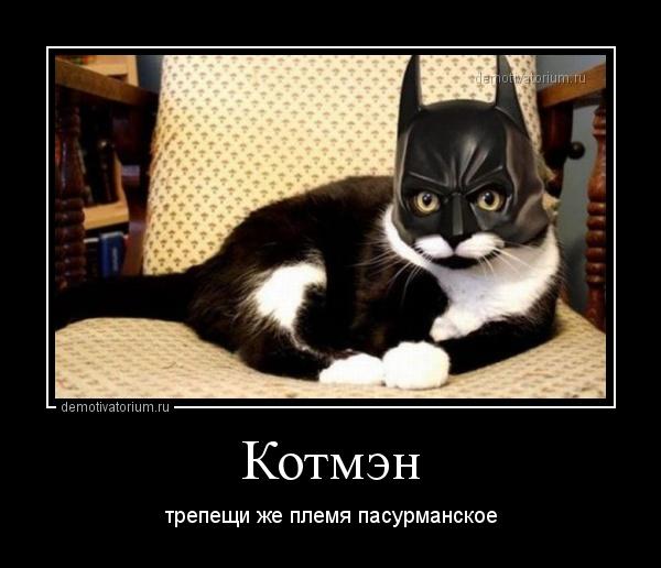 Подборка демотиваторов с котами
