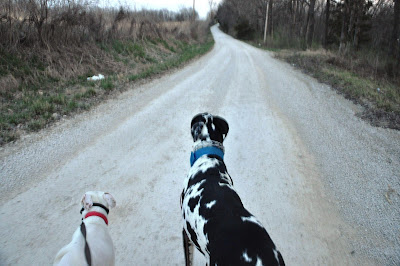 Ziggy and Remi walking down a gravel road