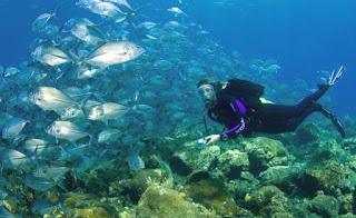 Wisata-Menyelam-Di-Indonesia.jpg