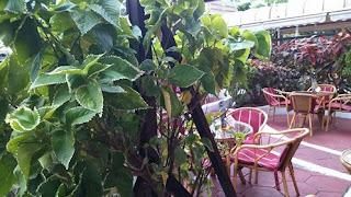 imagen de plantas nítida