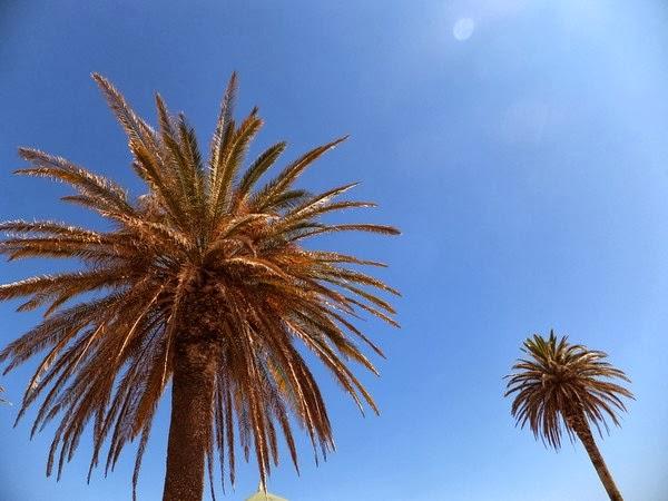 palmier portugal