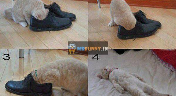 Stinky Shoes Funny