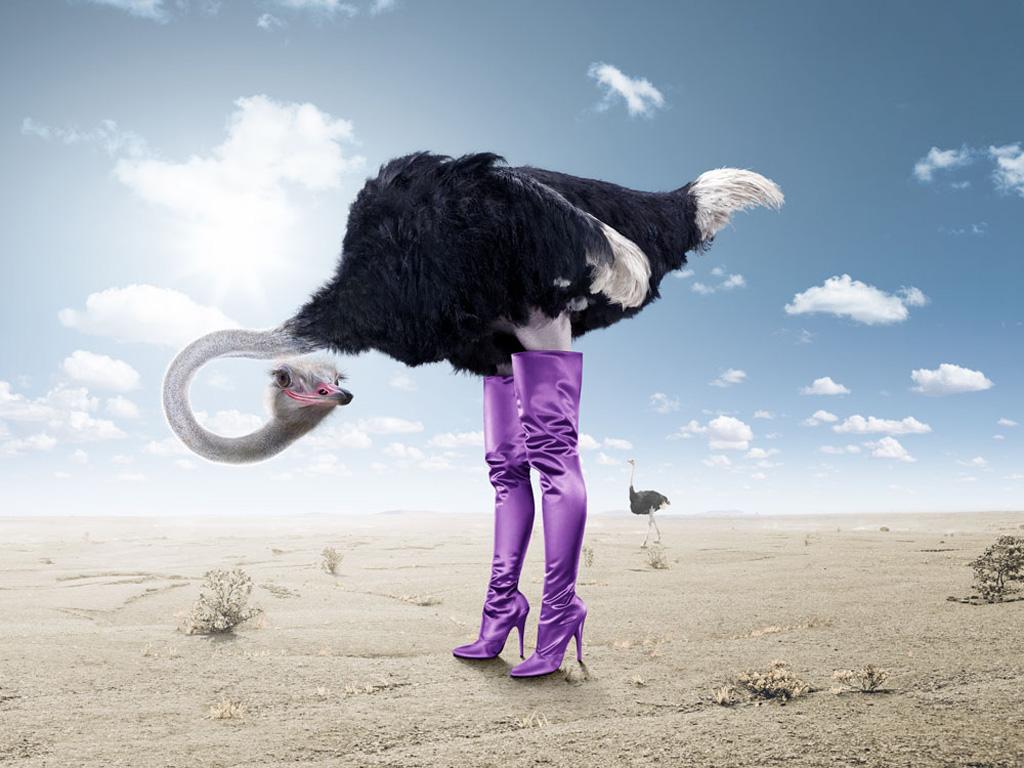 http://2.bp.blogspot.com/-pZSiLJkDoJM/TmV1ts7-H-I/AAAAAAAAFLg/KS4A8N8gwIk/s1600/Funny+ostrich+wallpaper.jpg