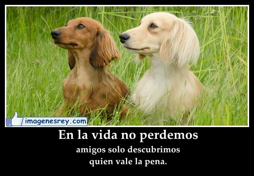 Frases con fotos de perros - Imagui