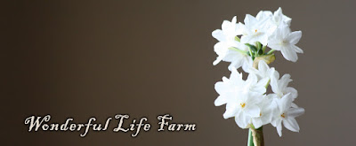 Wonderful Life Farm