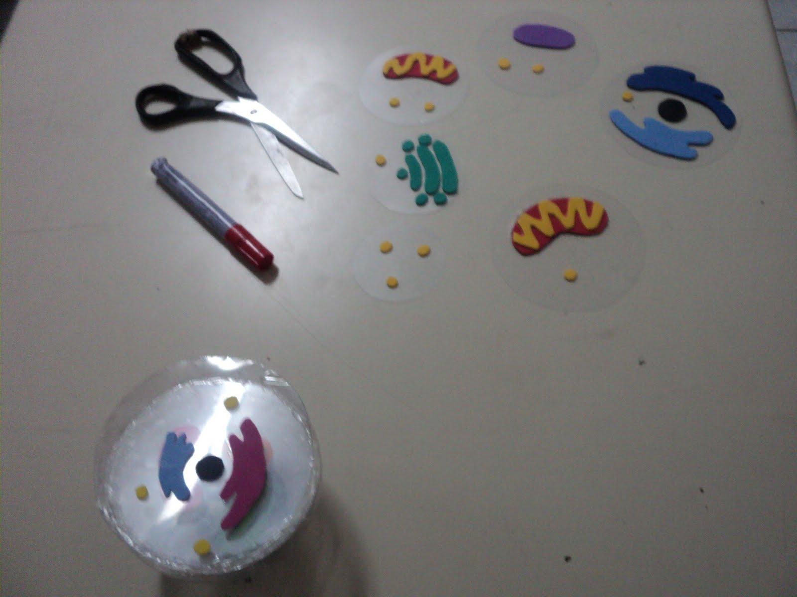 EXPERIENCIAS DE CIENCIAS EN EL IES LA COMA: Modelo de célula eucarionte
