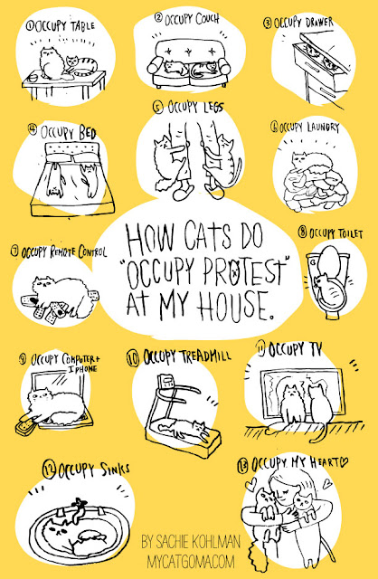 Occupy cats