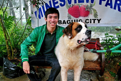 St. Bernard Dog in Baguio, Giant Dog in Minesview Park, Baguio City, Benguet