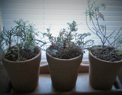Herbs in the Window -Vickie's Kitchen and Garden