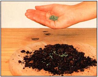Медленно растворяемые удобрения