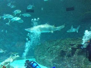 NC Aquarium in Manteo, NC
