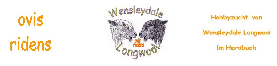 Wensleydale Longwool