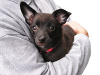 Como convencer meus pais a comprarem um cachorro?