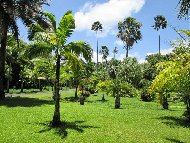 Jardin botanique de Papeari à Tahiti