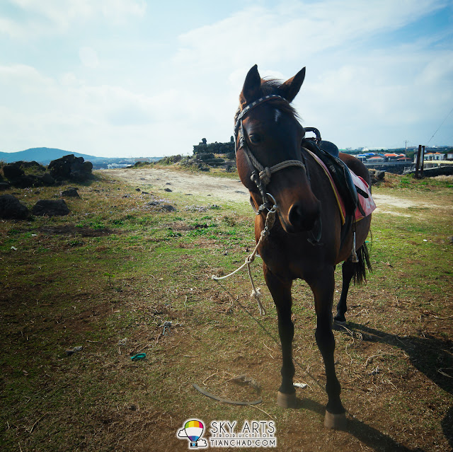 Horseback Riding on Udo Island