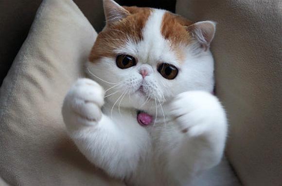 Kucing Kucing Paling Terkenal Di Internet Kucing Gue