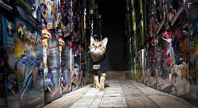 Millie, kucing pemberani yang bertugas sebagai penjaga keamanan pertama di dunia.