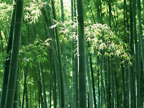 How to grow bamboo plants