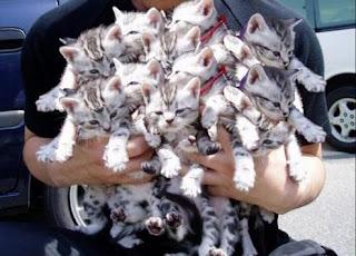 โรคในแมวชรา