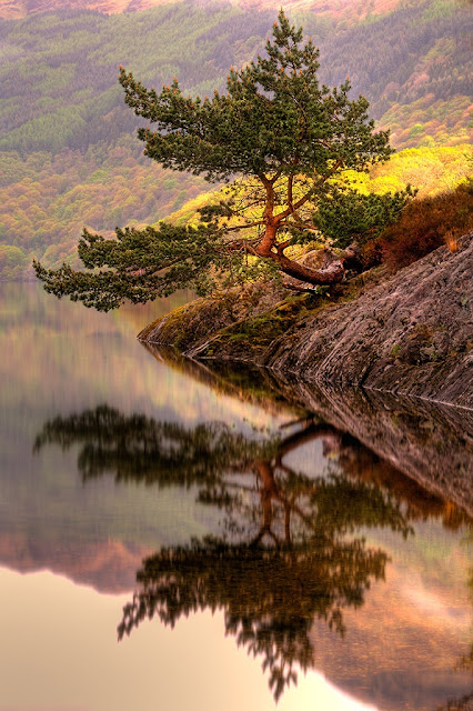 Rowardennan Bonsai - Scotland
