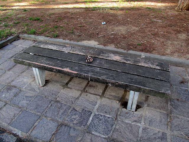 Bench with a pinecone, viale degli Avvalorati, Livorno