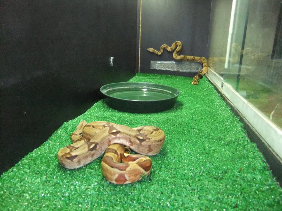 Guida allallevamento dei serpenti: terrario