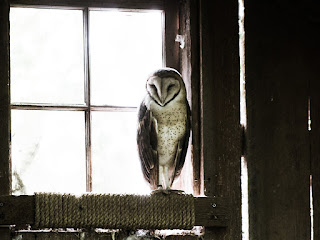 brown and white owl in sunny four-paned window
