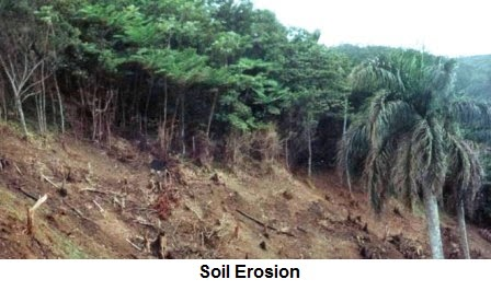 21st century problems deforestation 2013-11-14  after three decades of unbridled economic growth and mounting ecological problems,  will define china in the 21st century  deforestation is affecting.
