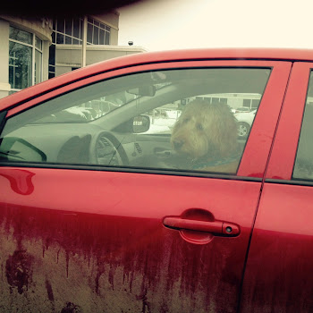 Dogs Get a Park....Now They Drive Cars