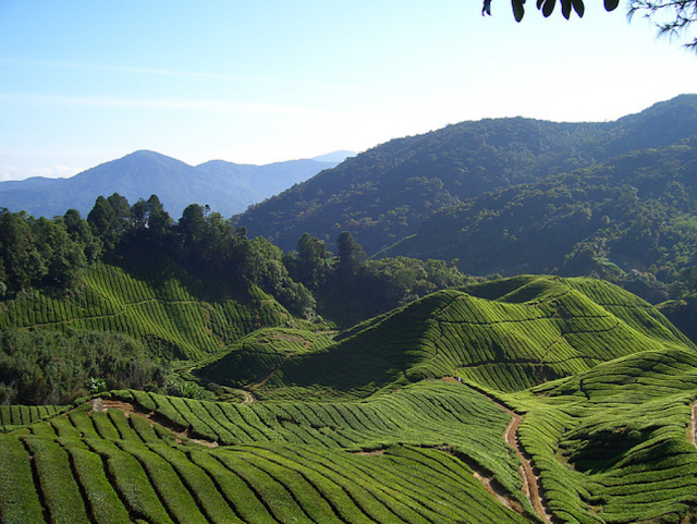a great view of cameron highlands in malaysia