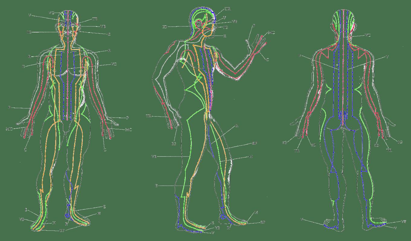 Enzo: Meridianos del Cuerpo Humano