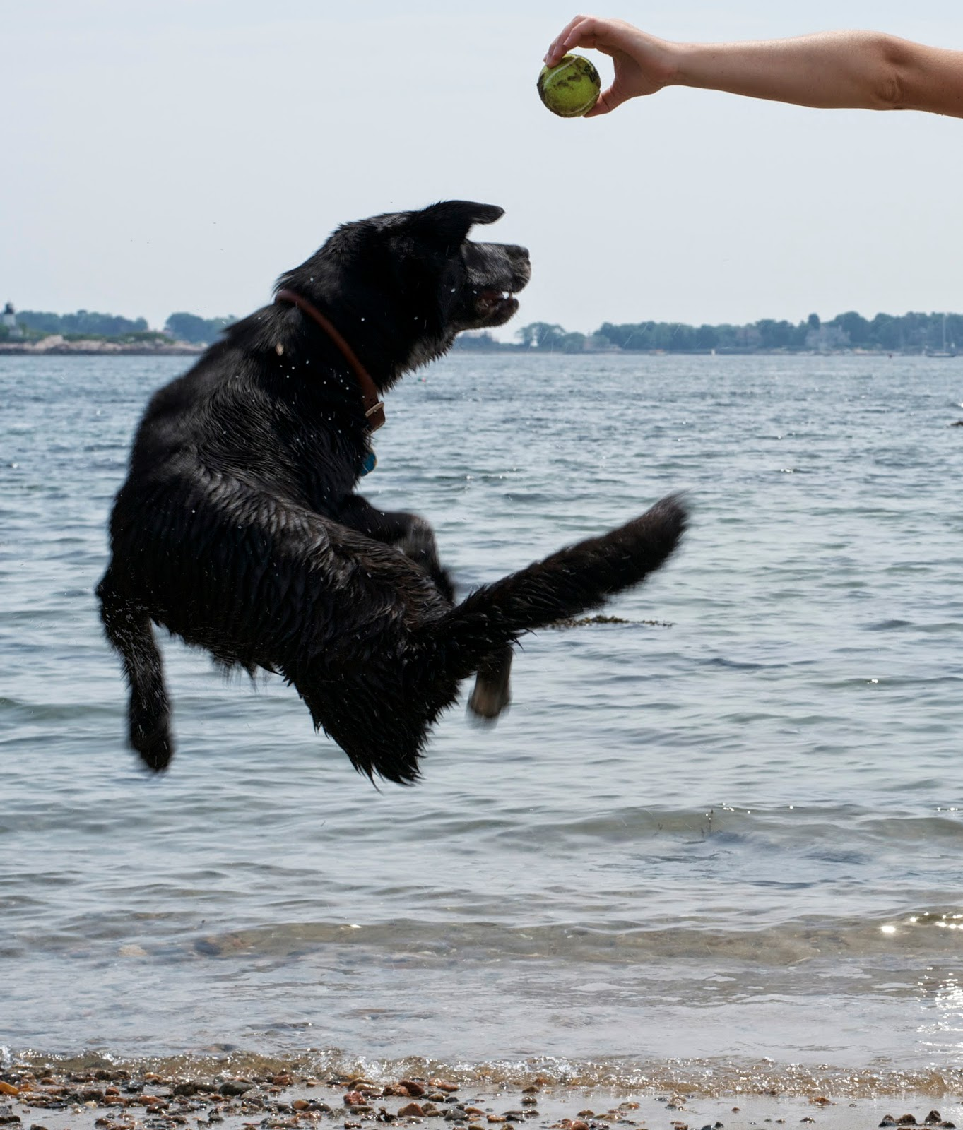 Ninja dog!!!