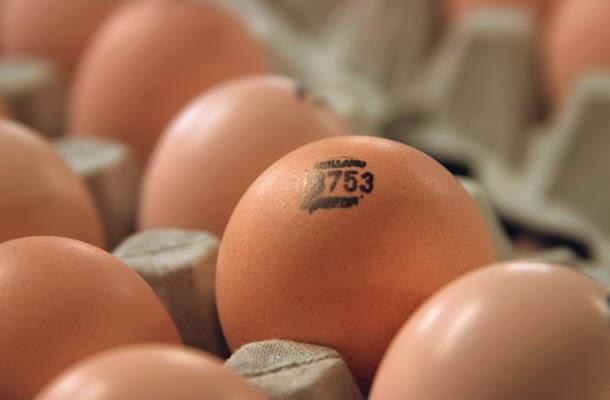 Хранение яиц в палетах