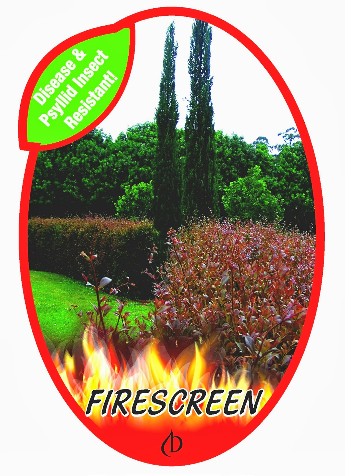 Limpinwood Australia  city pictures gallery : ... TREE TALES: Acmena FIRESCREEN WHERE to BUY AROUND AUSTRALIA